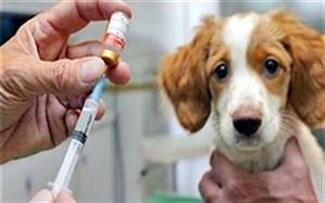 واکسیناسیون بیش از ۵۵۰ قلاده سگ علیه هاری در طبس