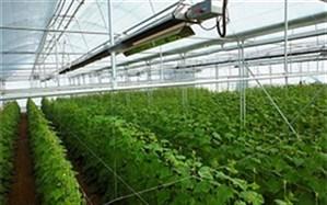 تولید۸ هزار تن محصولات گلخانه ای درخراسان جنوبی