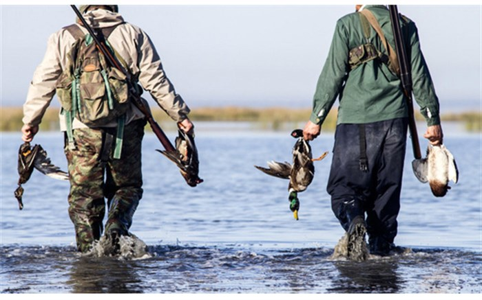 شکار غیرمجاز - پرندگان - محیط زیست