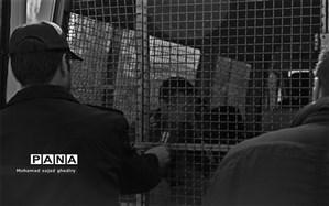 دستگیری 207 تن از اراذل و اوباش پایتخت + عکس