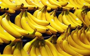 واردات موز به کشور 38 درصد کاهش یافت