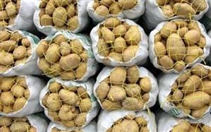 قیمت  سیبزمینی در عمدهفروشی به کیلویی ۷۰۰۰تومان رسید