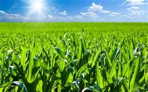افتتاح ۵۳ پروژه کشاورزی در استان اردبیل