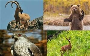تعریف ۷ سایت گردشگری حیات وحش در اردبیل