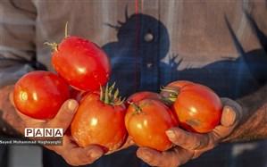۴۴تن گوجه فرنگی قاچاق در گمرک پرویزخان کشف شد