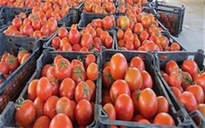 کشف گوجه فرنگی قاچاق در مرز سردشت