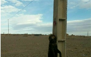 پیگیری برای شناسایی عاملان حیوان آزاری