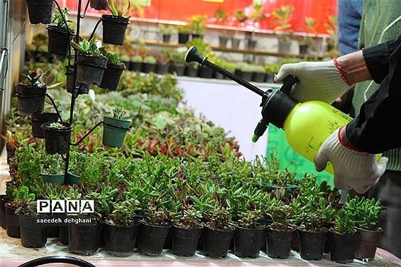 ۵ میلیون واحد گل و گیاه مازندران به خارج از کشور صادر شد