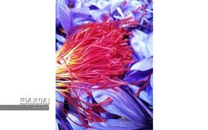 قیمت زعفران ۲ میلیون تومان کاهش یافت
