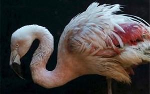 خرید و فروش گونه های حیات وحش ممنوع است