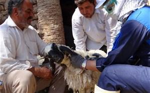 معاون سلامت دامپزشکی استان خراسان جنوبی :دامداران مراقب بیماری آنتروتوکسمی باشند