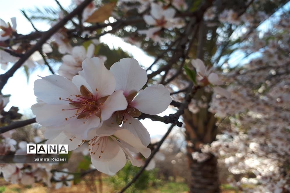 شکوفههای زمستانی