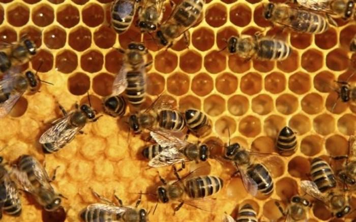 کازرون یکی از شهرستان های مهم در تولید عسل