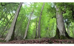 تخریب جنگلهای ایران طی 3 دهه گذشته افزایش یافته است
