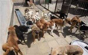بهسازی پناهگاه سگ های بلاصاحب در کرج