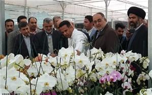 وزیر جهادکشاورزی: صادرات پنج کوزه گل ارکیده معادل یک بشکه نفت برای کشور ارز آوری دارد