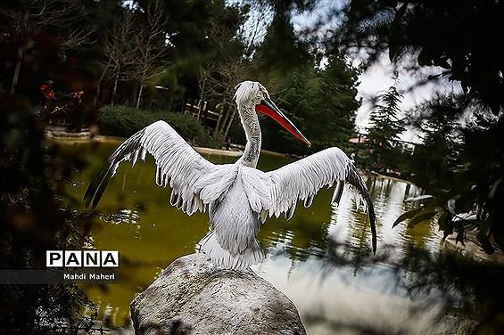 باغ پرندگان تهران در نوروز 98
