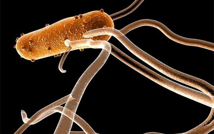 کشف یک باکتری که سلولهای ایمنی بدن را گروگان میگیرد!
