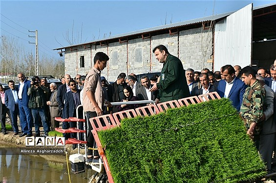 آیین اولین نشاء مکانیزه برنج کشور در روستای باقرتنگه بابلسر