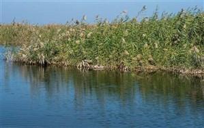 سیل اخیر 8 تالاب و دریاچه ارومیه  را سیراب کرد