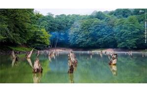 روایت جنگلهای هیرکانی در فیلمهای بخش ویژه جشنواره فیلم وارش