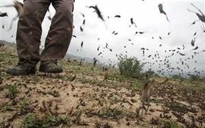 ورود سازمان مدیریت بحران به موضوع هجوم ملخها