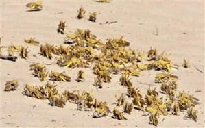 مبارزه با ملخ صحرایی در پنج شهرستان سیستان و بلوچستان
