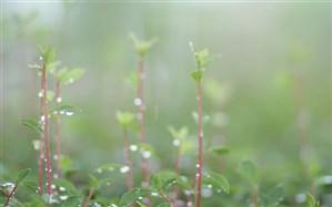 مطلوب شدن  پوشش گیاهی در پی بارندگیهای اخیر کشور