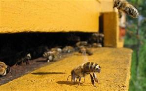 زنبورداران آذربایجان غربی افت دما را جدی بگیرند