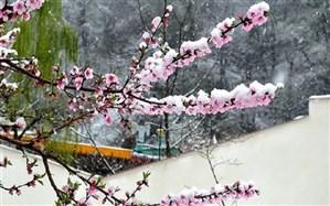 خسارت برف به باغ های آذربایجان غربی 90 درصد تخمین زده می شود