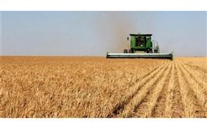 فتحی: شایعه افزایش قیمت گندم در راستای اخلال در روند خودکفایی این محصول استراتژیک است