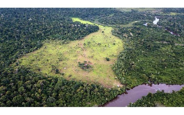 12 میلیون هکتار جنگل استوایی نابود شد