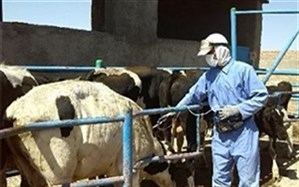 رئیس شبکه دامپزشکی شهرستان نهبندان :واکسیناسیون ۴۹ هزار راس دام در نهبندان