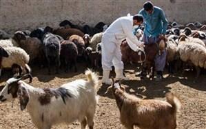بیش از سه میلیون راس دام سبک در آذربایجان شرقی علیه تب برفکی واکسینه شدند