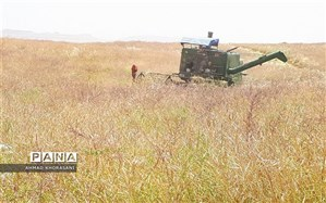 آغاز عملیات برداشت جو و دانه روغنی کلزا از مزارع شهرستان لالی