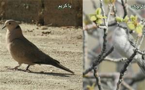 مشاهده دوگونه پرنده جدید در چهارمحال و بختیاری