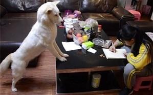 سگ باهوشی که مواظب مشق نوشتن دختر صاحبش است