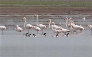تالاب صالحیه نظر آباد میزبان 300 گونه پرنده نادر از سراسر دنیا است