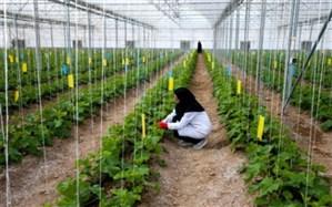 تولید 2500 تن محصول سبزی و صیفی در چهارمحال و بختیاری