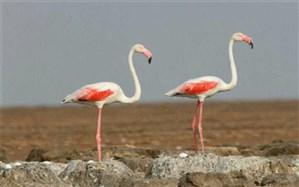 کشف و ضبط گونه های حیات وحش در شهرستان ملارد