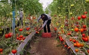 فرمانداران فارس، بر اساس توسعه گلخانهها ارزیابی میشوند