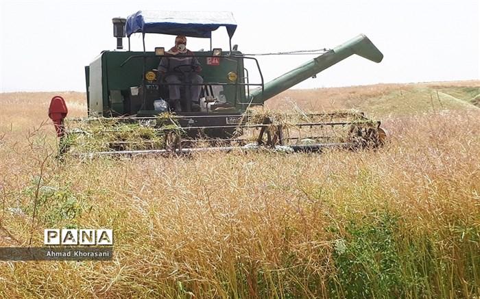 برداشت گندم و کلزا از مزارع شهرستان لالی