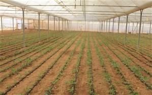 فعالیت ۷۵ گلخانه تولید محصولات کشاورزی در چهارمحال و بختیاری