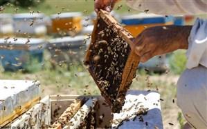 موزه عسل راه اندازی می شود