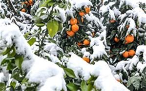 خسارت 920 میلیارد ریالی سرما و سیل به مزارع، اماکن دامی و تاسیسات آبی چاراویماق