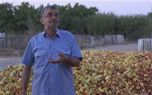 «میوههای روی درخت» از مشکلات کشاورزی ایران میگوید
