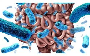 کاهش اضطراب با تغییر باکتریهای روده