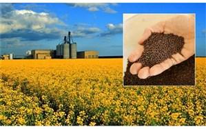 وابستگی به دانههای روغنی و کنجاله ننگ بخش کشاورزی است