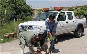 17 هزار و 23 سگ در آذربایجان شرقی واکسینه شدند
