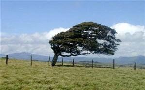 کاهش نسبی دما و وزش باد شدید در ۴ استان